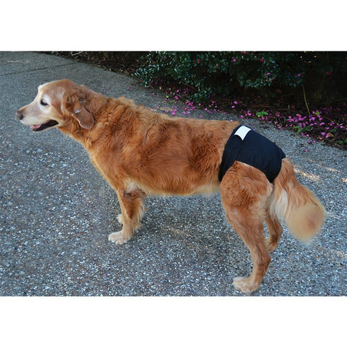 Reusuable Dog Britches/ Diapers