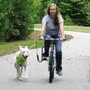 Springer Bike