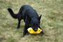 Sportsdog Tug by Klin Sport