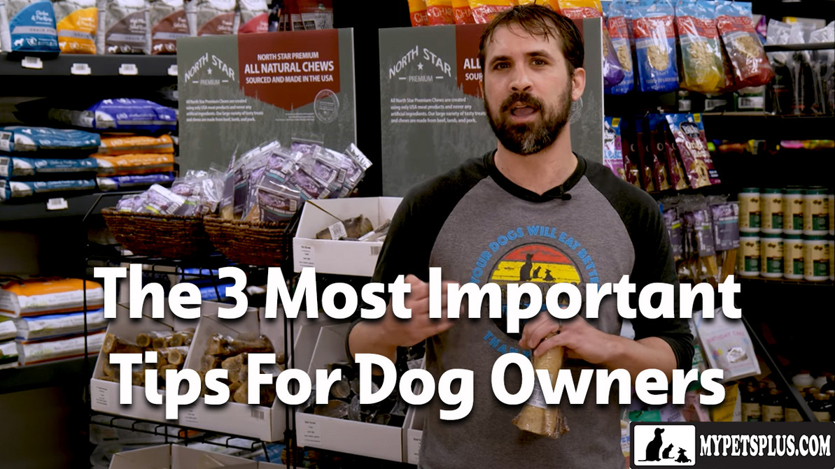The 3 Most Important Tips For Dog Owners