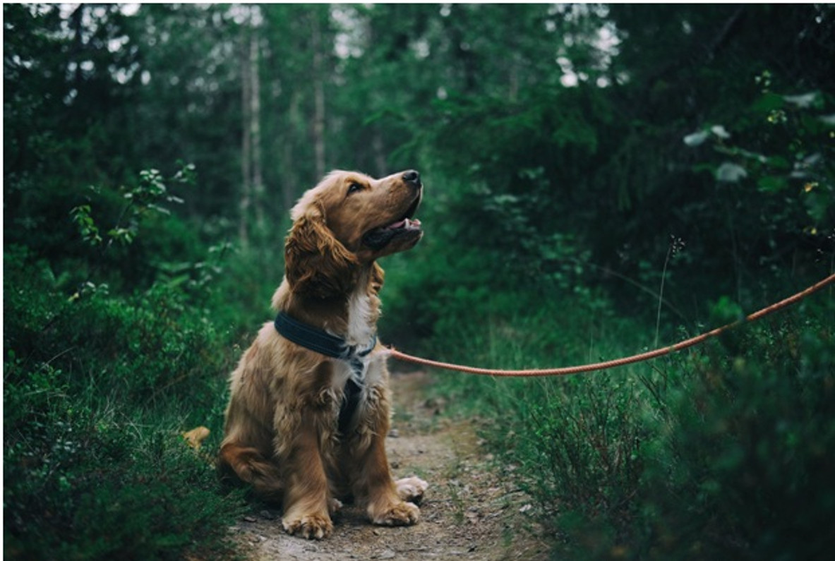 The Advantages of Freeze-Dried Dog Food