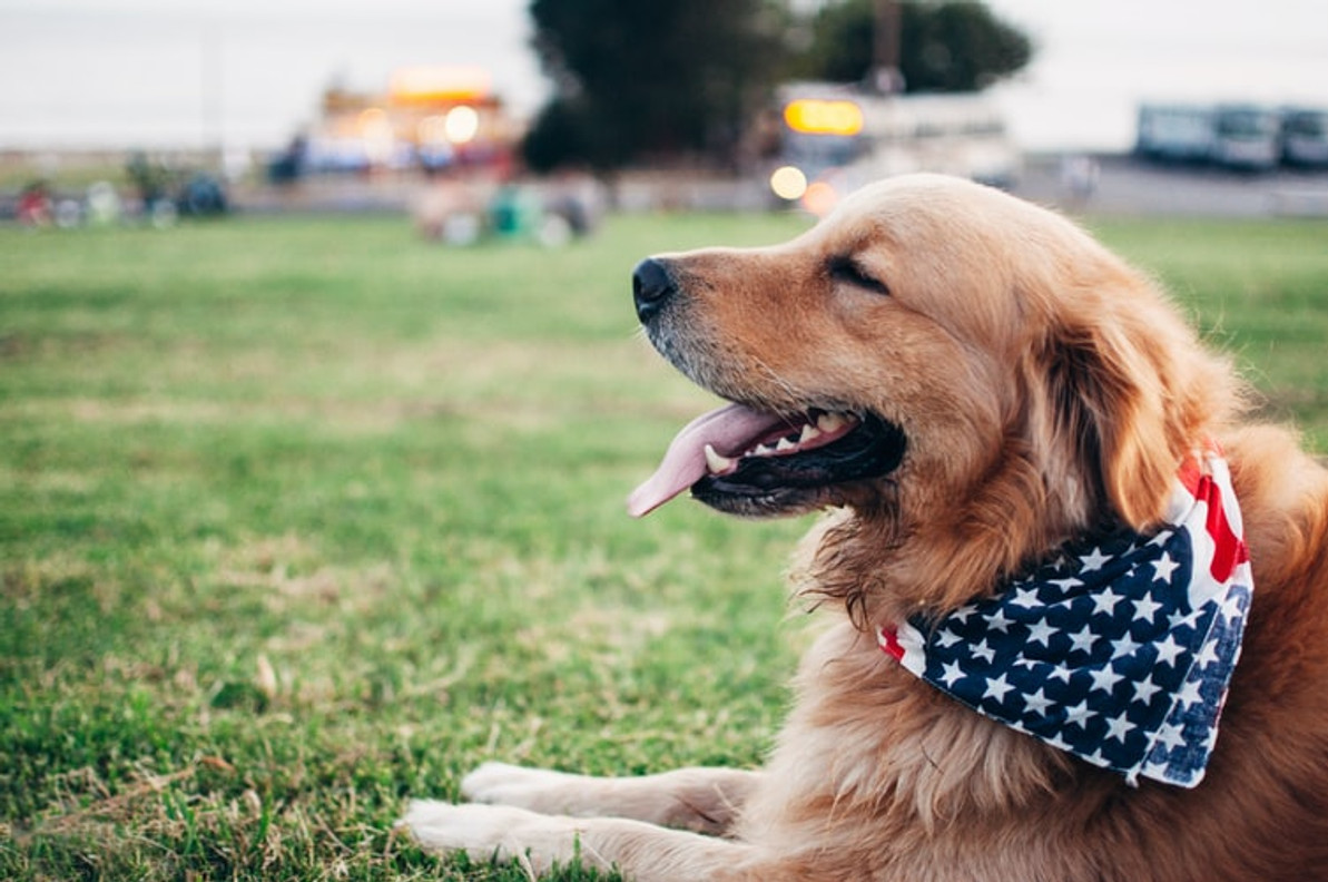 4th of July And Your Pets