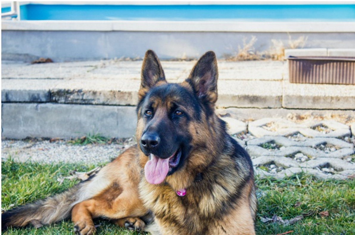 6 Best Wet Dog Foods With All Natural Ingredients