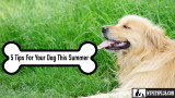 5 Tips For An Incredible Summer With Your Dog