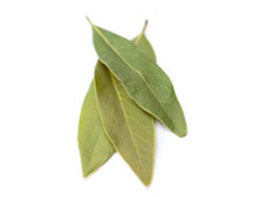 Bay (West Indian) Essential Oil