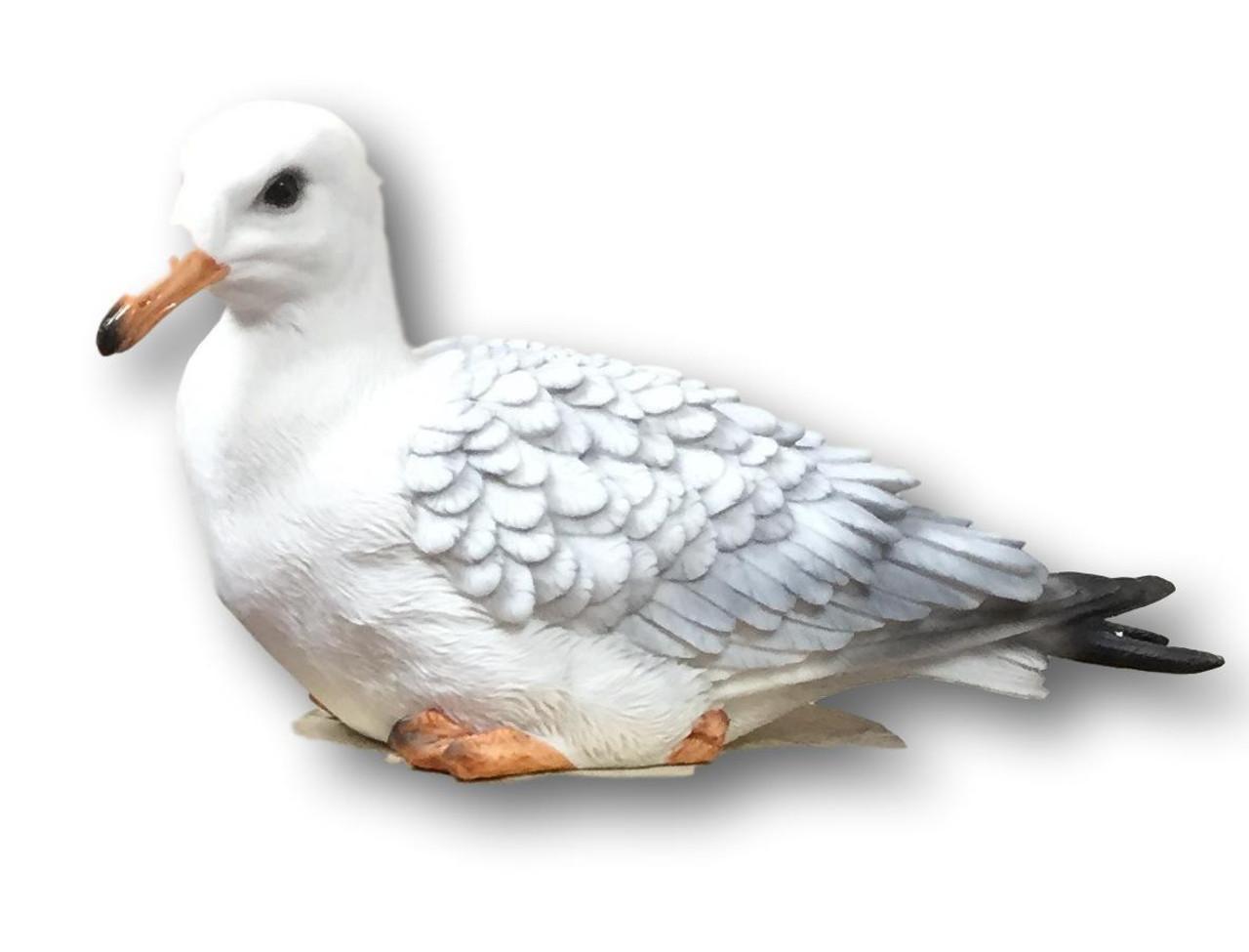 Birds / Pelicans / Blue Herons / Seagulls