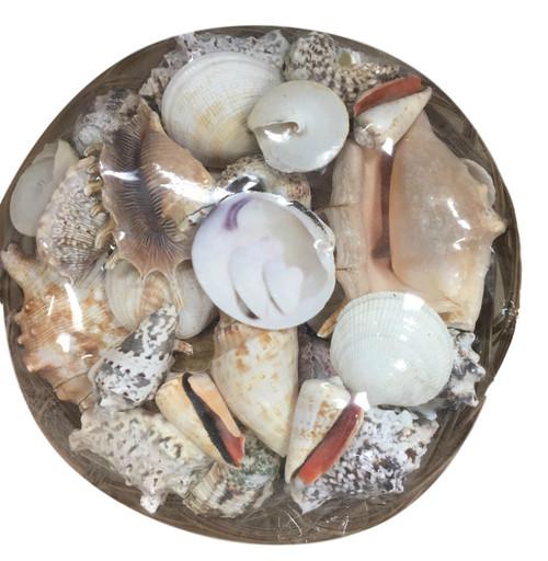 Basket of Sea Shells  Nautical Seasons
