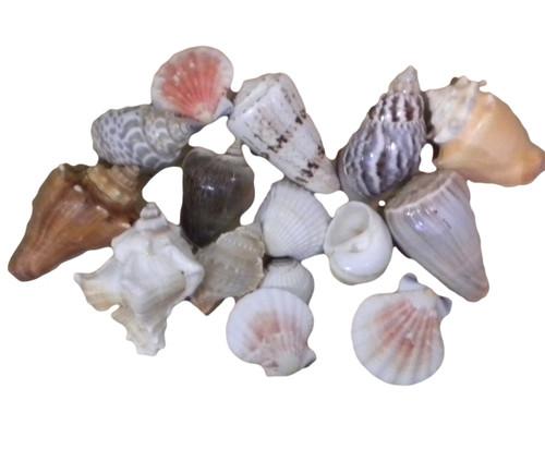 Deluxe Shell Assortment  Nautical Seasons