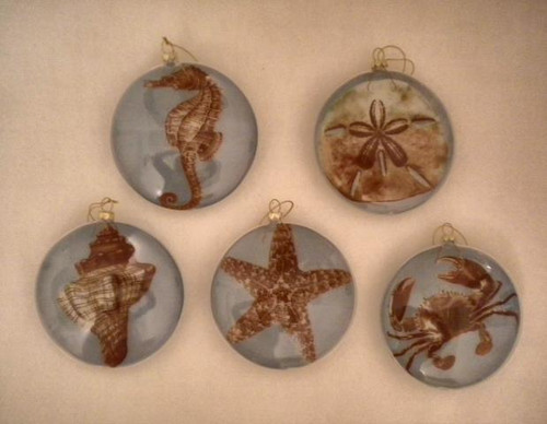Shell Sea Life Ornament Nautical Seasons