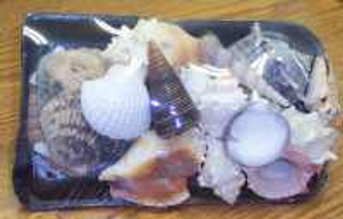SeaShell Pack Assorted  Nautical Seasons