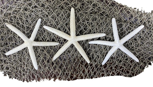 Finger Starfish With Fish Net  Nautical Seasons
