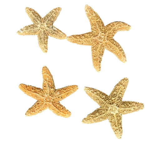 Sugar Starfish Authentic  Nautical Seasons