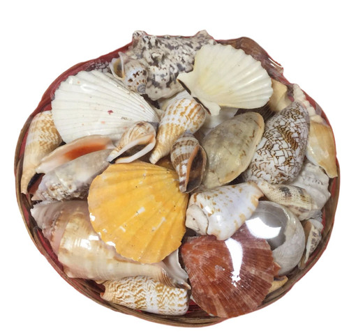 Basket of Sea Shells  Nautical Seasons