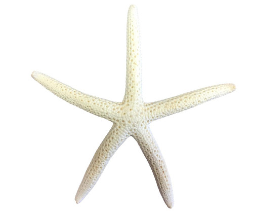 Mini Finger Starfish Pencil Starfish  Nautical Seasons