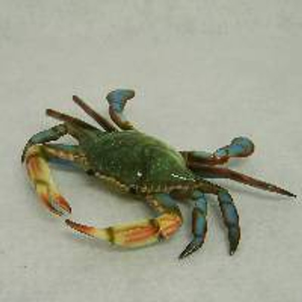 Blue Crab Decoration  Nautical Seasons