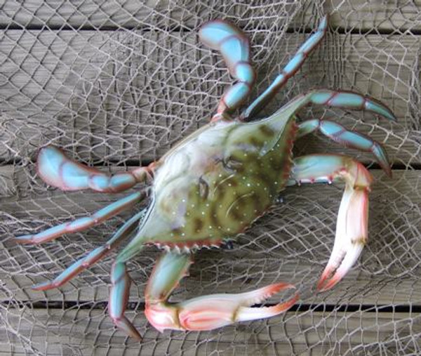 Blue Crab East Coast Large Nautical Seasons