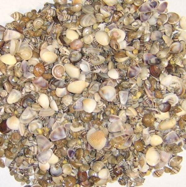 Miniature Seashell Assortment #8137