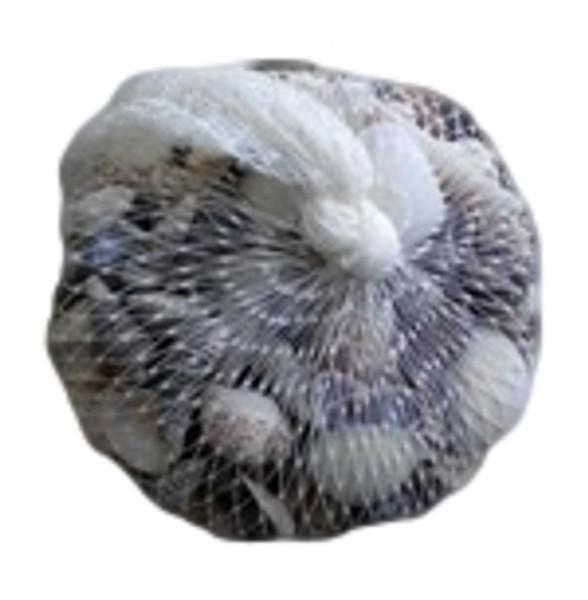 Small Sea Shells  Nautical Seasons
