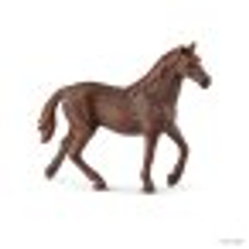 English Thoroughbred Mare