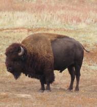 Dale & Debbie Part 9 - Wildlife Series: Land Mammals