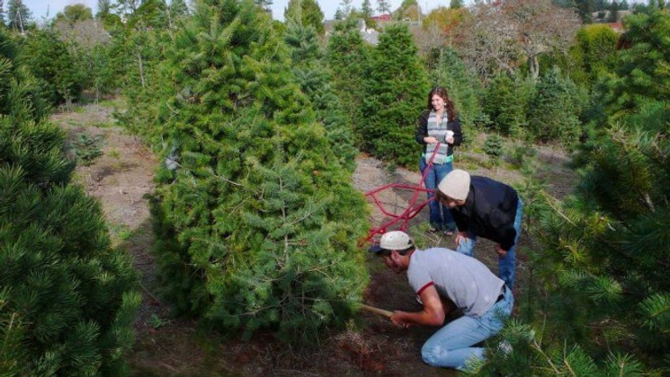 Five Steps towards a Green Christmas Tree