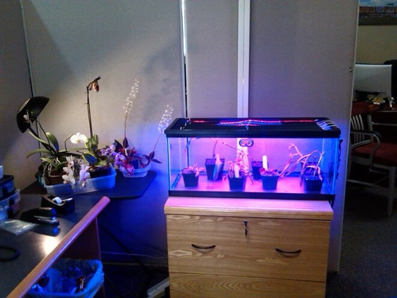 Growing Plants Indoors with LED Strip Lighting