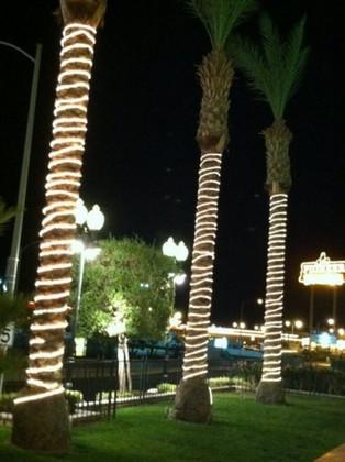 Illuminating Palm Trees with LED Rope Lights