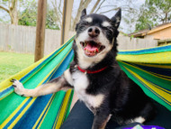 You and your pet dog need a hammock like this to spend the summer