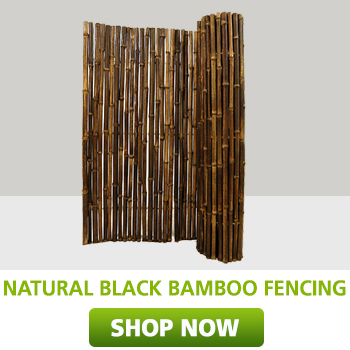 Natural Black bamboo fencing