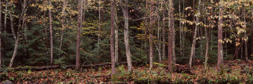 """Images Of The Land ShelfScapes 2025 Forest #4 10"""" x 30"""" Backdrop"""