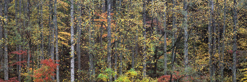 """Images Of The Land ShelfScapes 1769 Forest #5 10"""" x 30"""" Backdrop"""