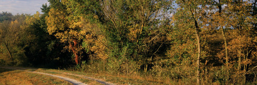 """Images Of The Land® ShelfScapes #1107 Forest & Road 10"""" x 30"""" Backdrop"""