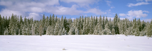 """Images Of The Land ShelfScapes #1221 European Winter 10"""" x 30"""" Scenic Backdrop"""