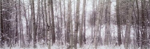 "Images Of The Land® ShelfScapes #716 Trees In Winter 10"" x 30"" Scenic Backdrop"