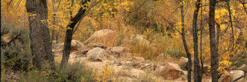 """Images Of The Land® ShelfScapes #2106 Forest #2 10"""" x 30"""" Backdrop"""