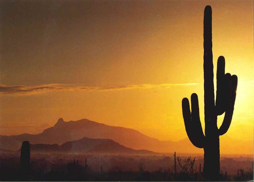 10 Original Photographic Art Note Cards With Envelopes Saguaro Cactus Arizona