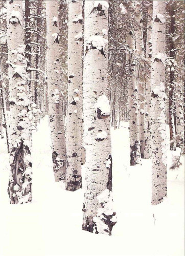 10 Original Photographic Art Note Cards With Envelopes Aspen Boles Arizona