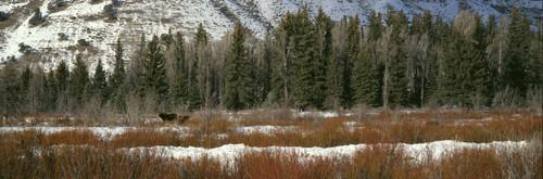 """ShelfScapes #1289 Winter Scene 10"""" x 30"""" Scenic Backdrop"""