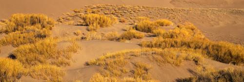 "ShelfScapes 2186 Desert Terrain Diorama Backdrop 10"" x 30"""