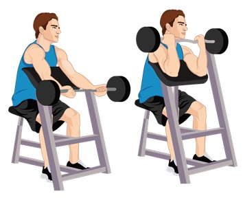 Illustrative Example of the Bicep Curl Exercise