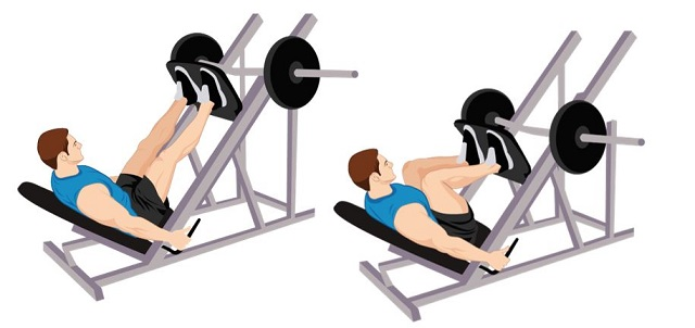 Illustrative Example of the Leg Press Exercise