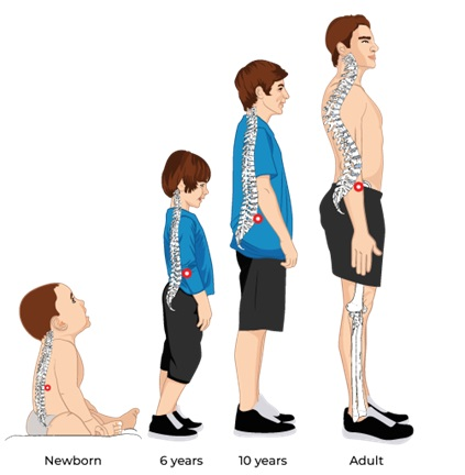 Illustrative Example of Proper Neutral Spinal Posture after Using the Power Cushion