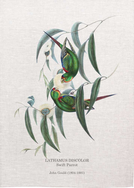 Swift Parrot design by John Gould printed on tea towel, Made in Australia
