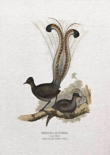 Lyre Bird MENURA SUPERBA John Gould printed on tea towel Made in Australia