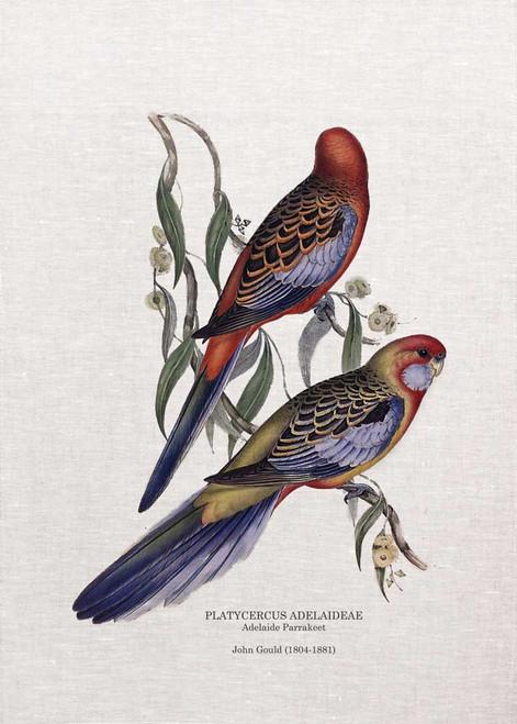 Adelaides Parrakeet PLATYCERCUS ADELAIDEAE  by John Gould  printed on tea towel Made in Australia
