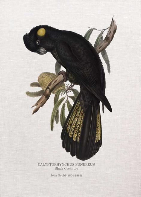 Black Cockatoo CALYPTORHYNCHUS FUNEREUS   by John Gould  printed on tea towel Made in Australia