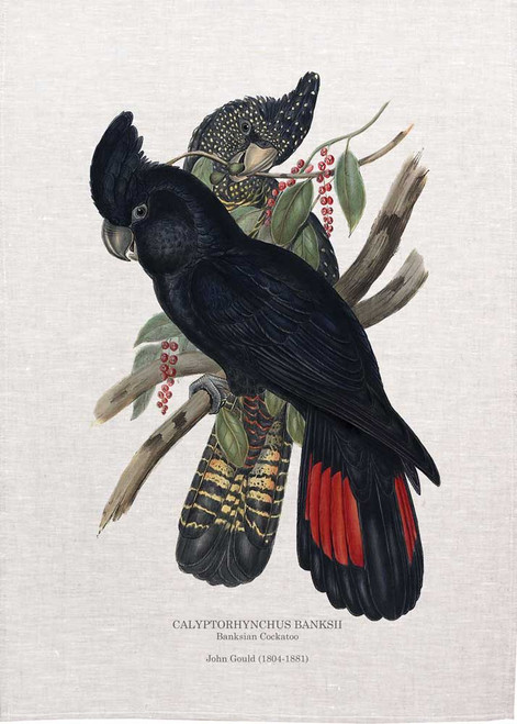 Banksian Cockatoo CALYPTORHYNCHUS BANKSII  by John Gould  printed on tea towel Made in Australia