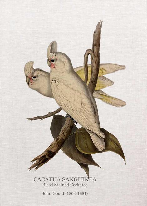 Blood Stained Cockatoo CACATUA SANGUINEA  John Gould  printed on tea towel Made in Australia