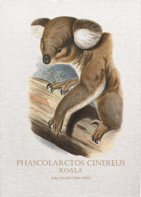 Koala, Phascolarctos cinereus by John Gould printed on tea towel, Made in Australia