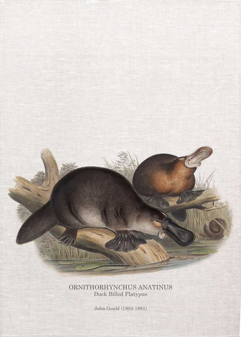 Duck Billed Platypus ORNITHORHYNCHUS ANATINUS by John Gould printed on tea towel, Made in Australia